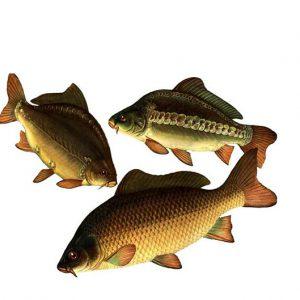 Правдин И.Ф. Руководство по изучению рыб (преимущественно пресноводных)