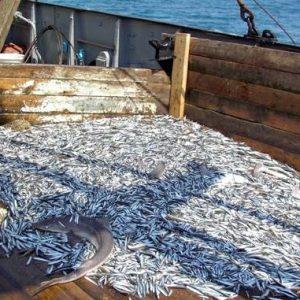Вітчизняна рибна галузь стає самодостатньою