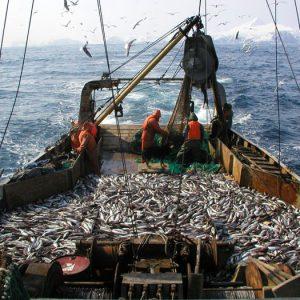 Вылов российских рыбаков к середине марта достиг 1 млн тонн